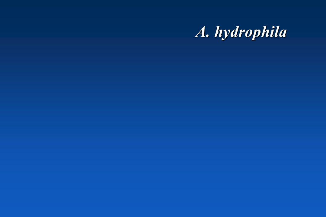 A. hydrophila
