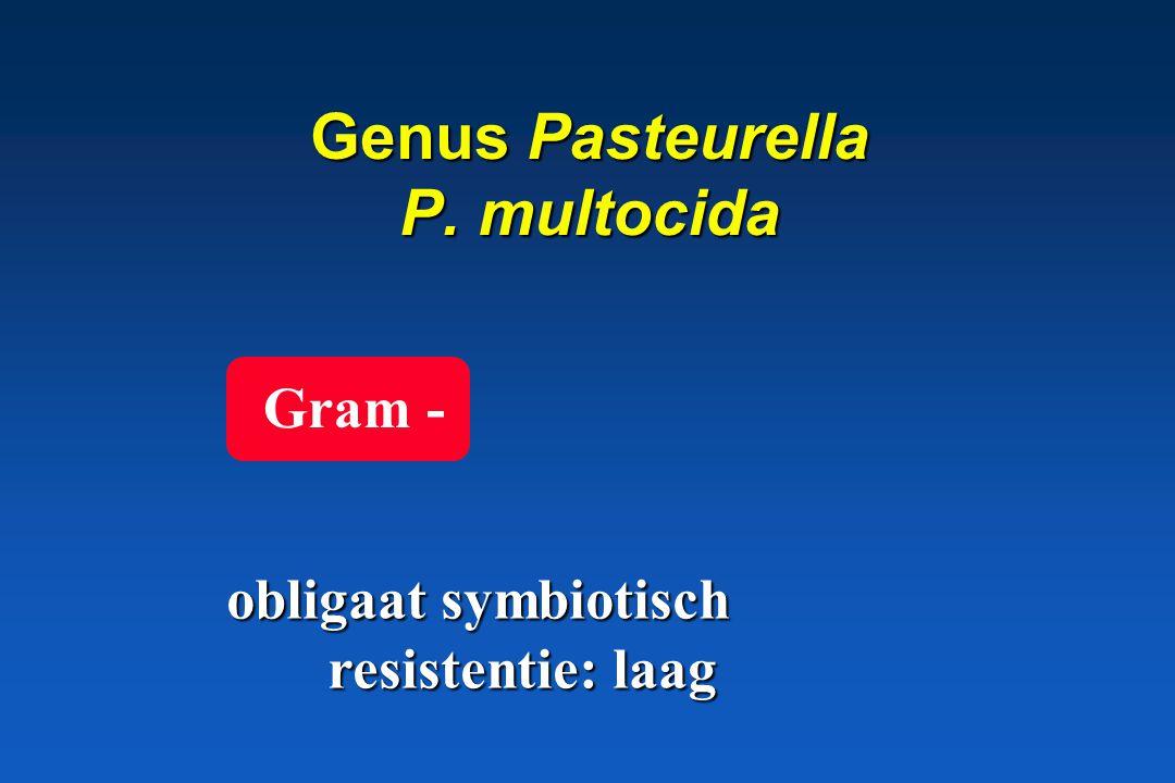 Genus Pasteurella P. multocida
