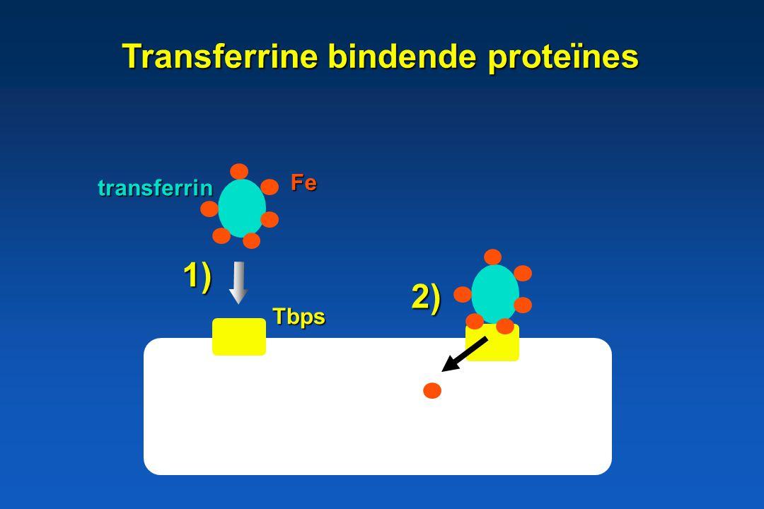 Transferrine bindende proteïnes