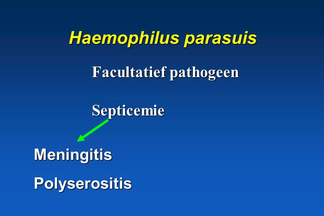 Haemophilus parasuis Facultatief pathogeen Septicemie Meningitis