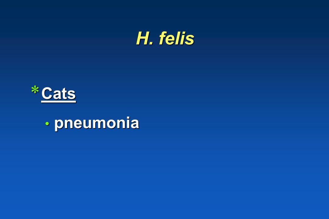 H. felis Cats pneumonia