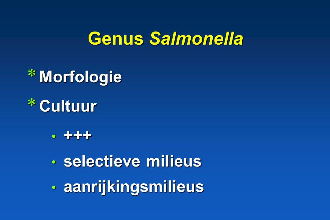 Genus Salmonella Morfologie Cultuur +++ selectieve milieus