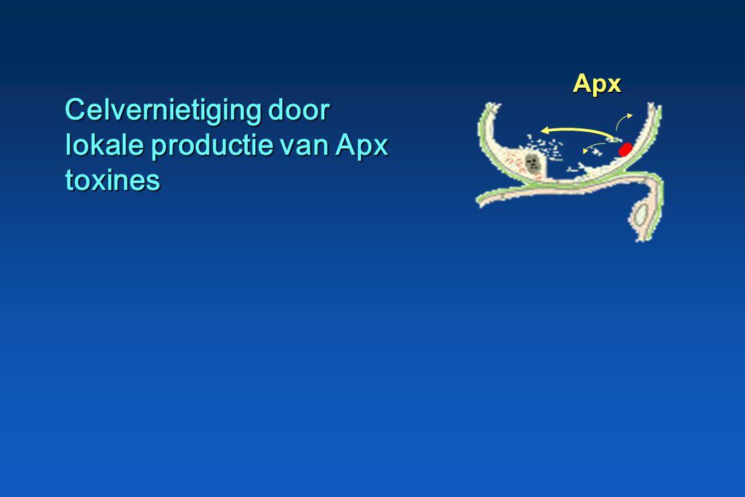 Celvernietiging door lokale productie van Apx toxines