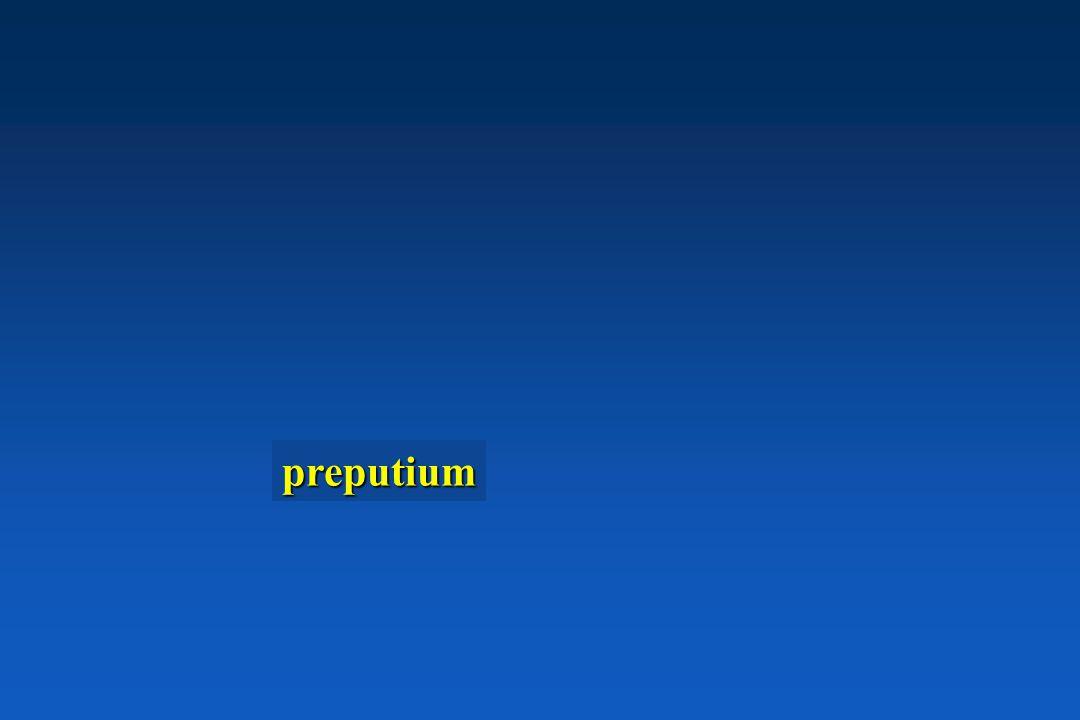 preputium
