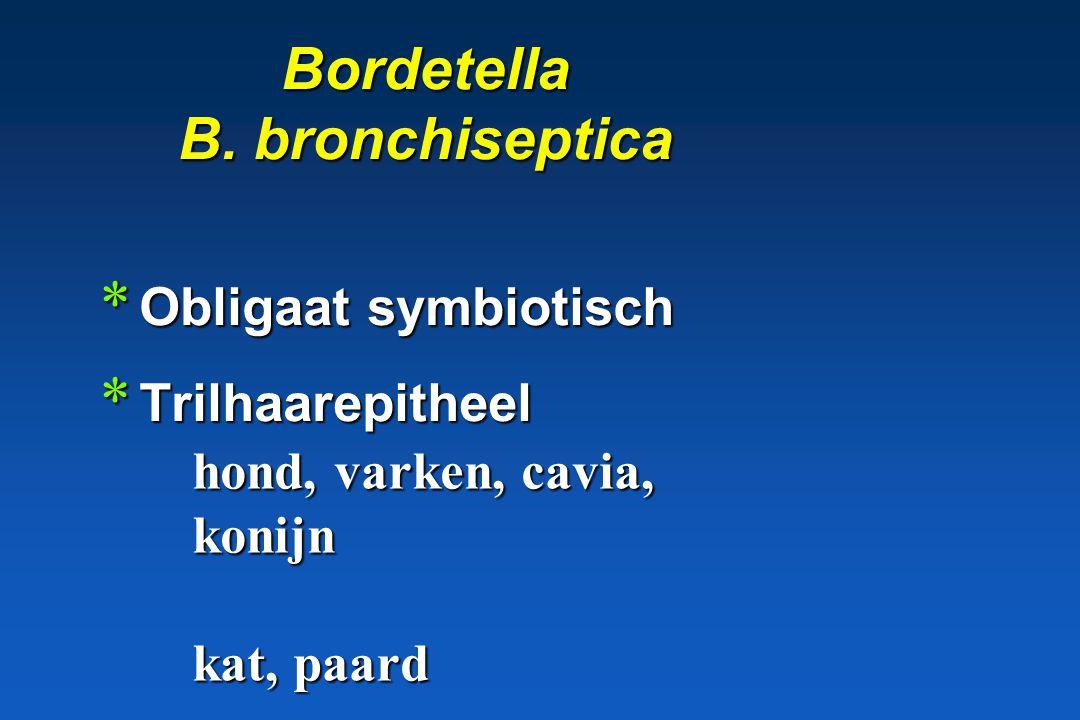 Bordetella B. bronchiseptica