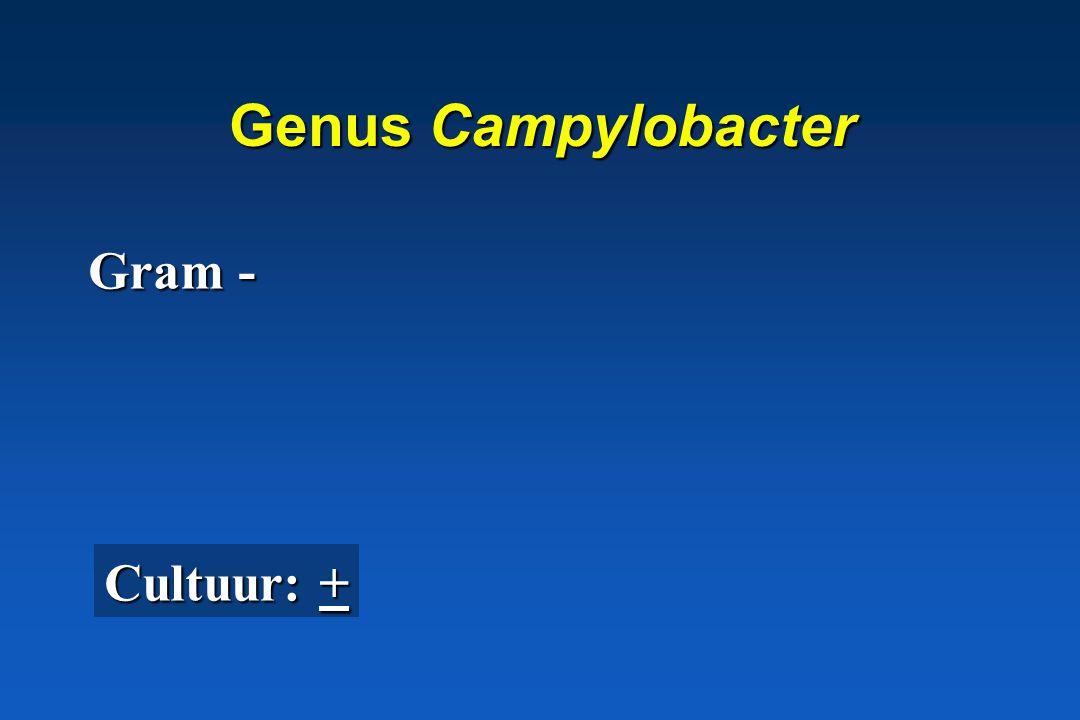 Genus Campylobacter Gram - Cultuur: +