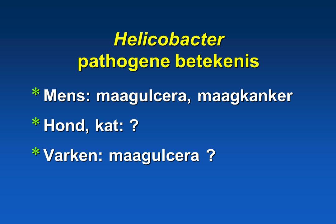 Helicobacter pathogene betekenis