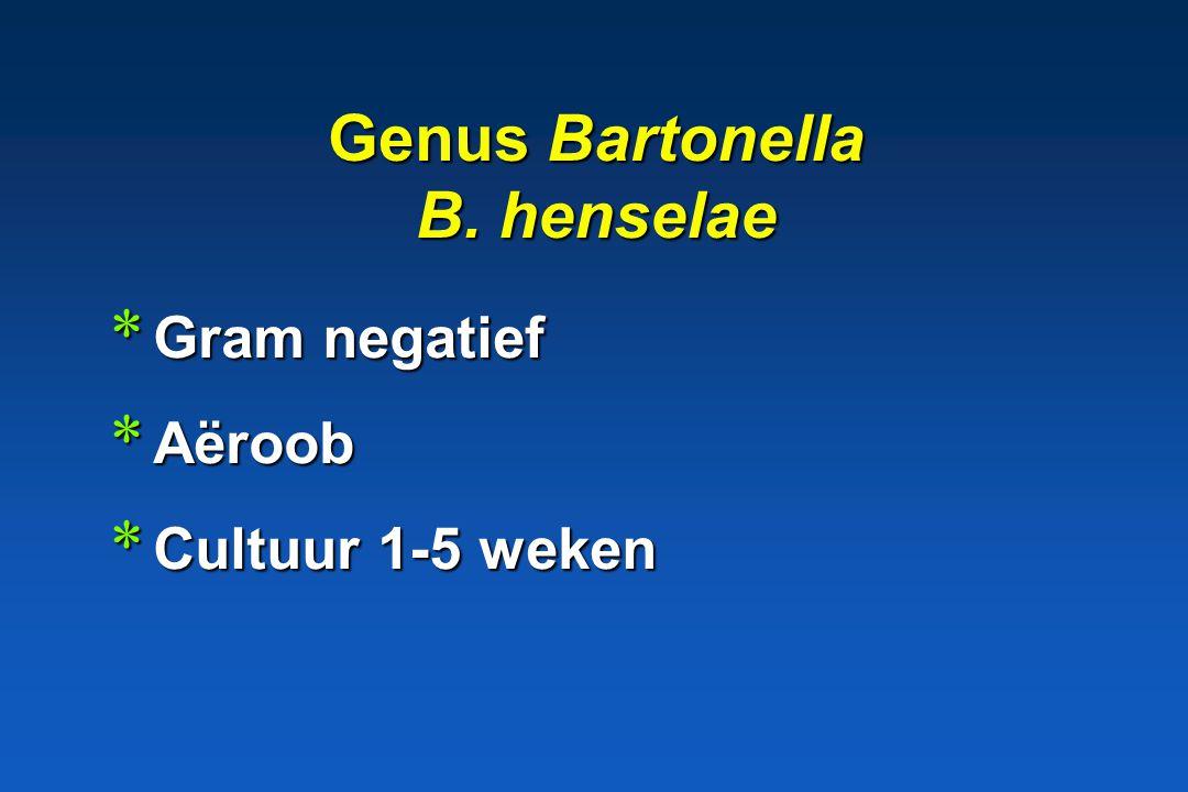 Genus Bartonella B. henselae