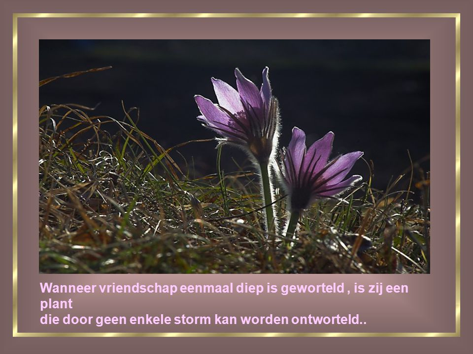 Wanneer vriendschap eenmaal diep is geworteld , is zij een plant die door geen enkele storm kan worden ontworteld..