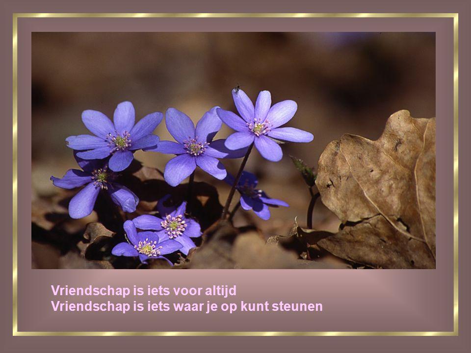 Vriendschap is iets voor altijd Vriendschap is iets waar je op kunt steunen