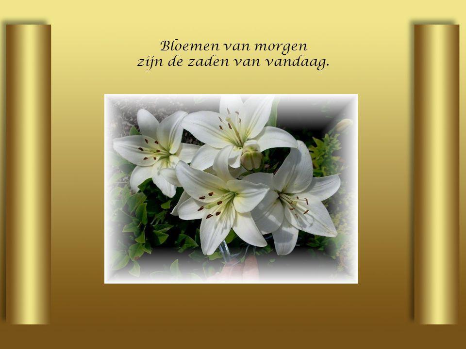 Bloemen van morgen zijn de zaden van vandaag.