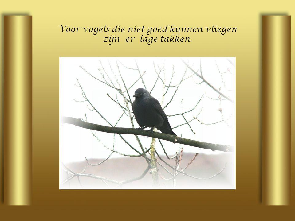 Voor vogels die niet goed kunnen vliegen zijn er lage takken.