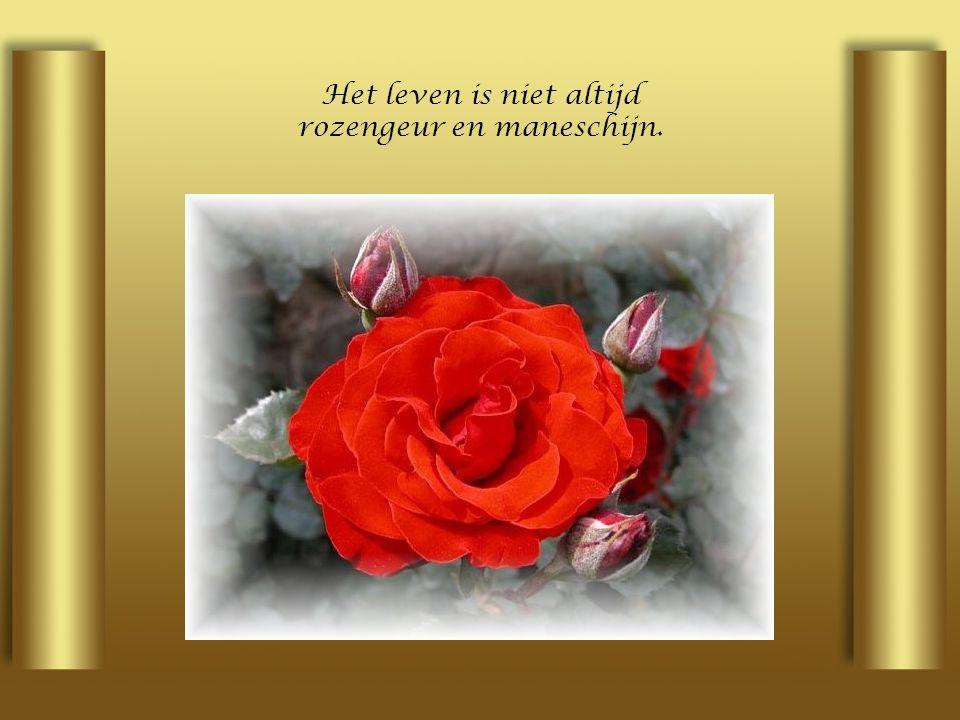 Het leven is niet altijd rozengeur en maneschijn.
