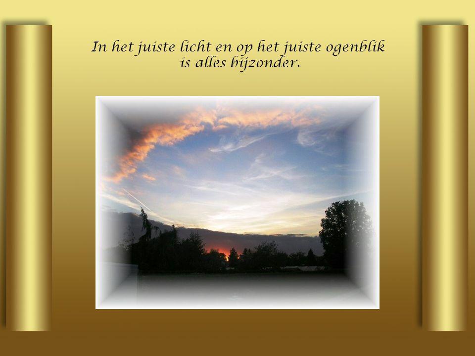 In het juiste licht en op het juiste ogenblik is alles bijzonder.