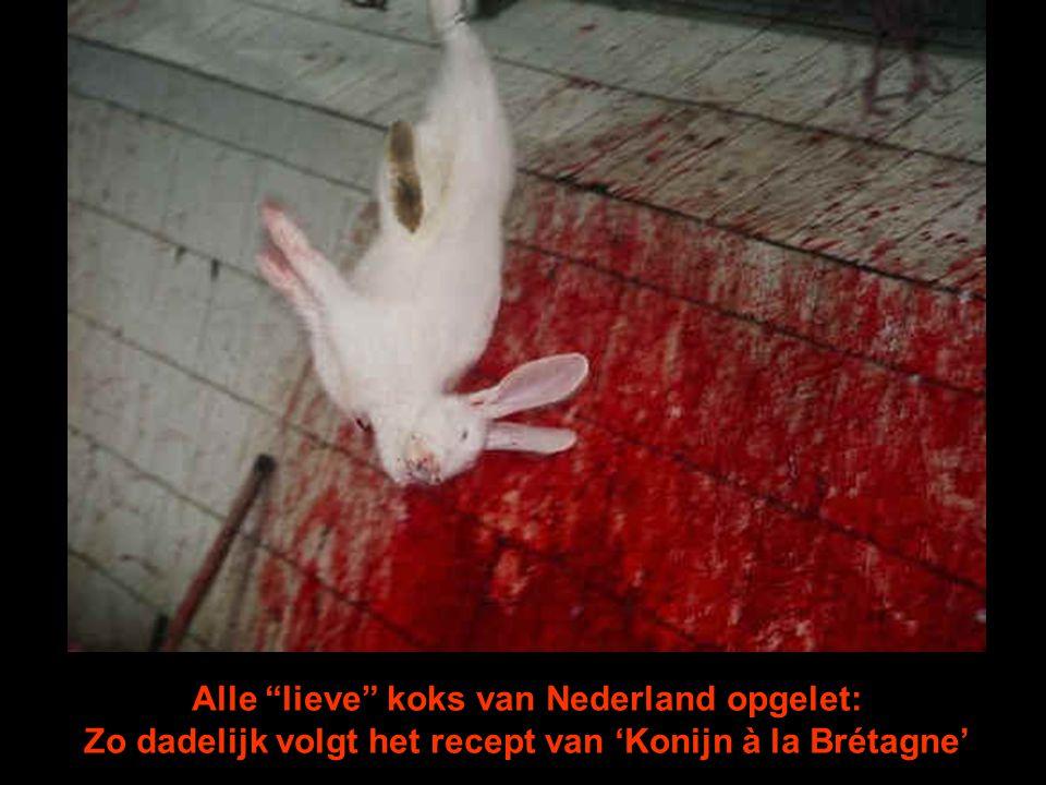 Alle lieve koks van Nederland opgelet: