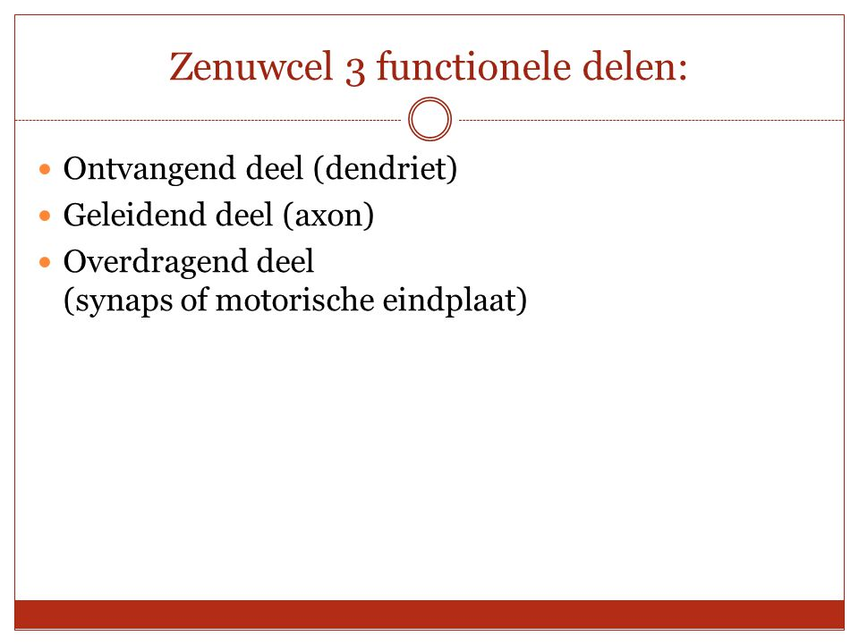 Zenuwcel 3 functionele delen: