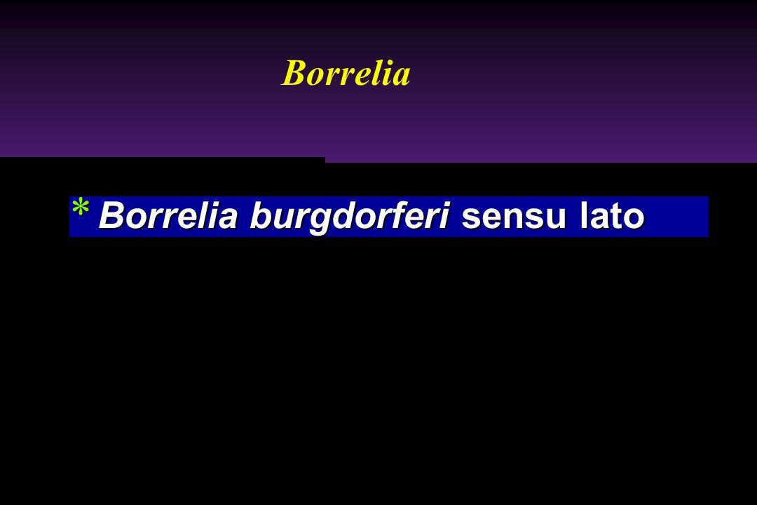 Borrelia Borrelia burgdorferi sensu lato