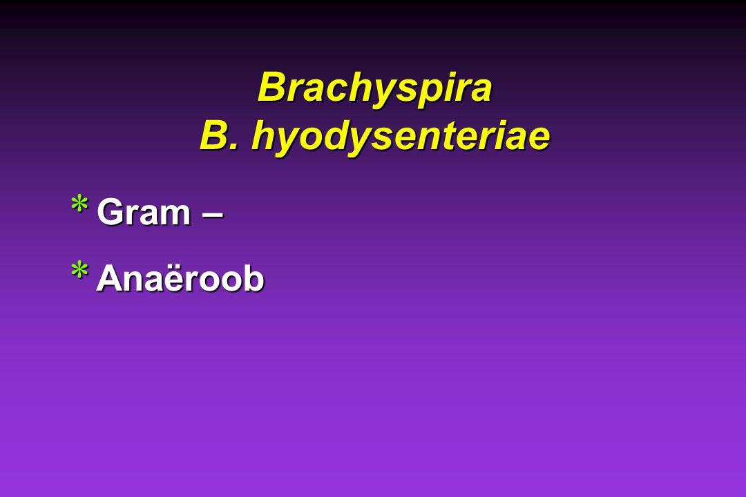 Brachyspira B. hyodysenteriae