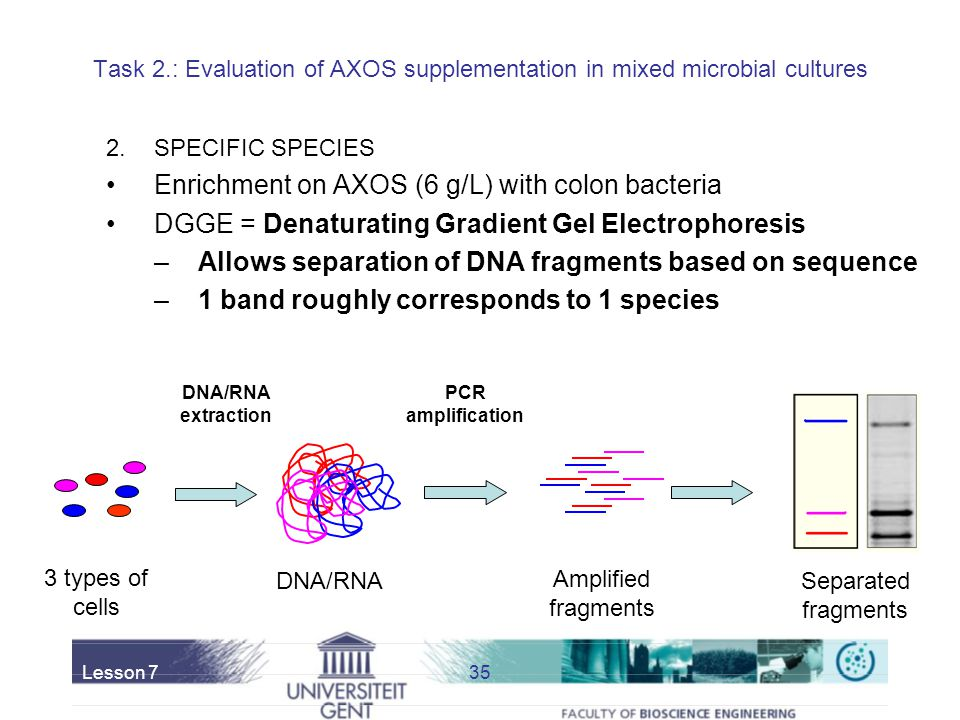 Enrichment on AXOS (6 g/L) with colon bacteria