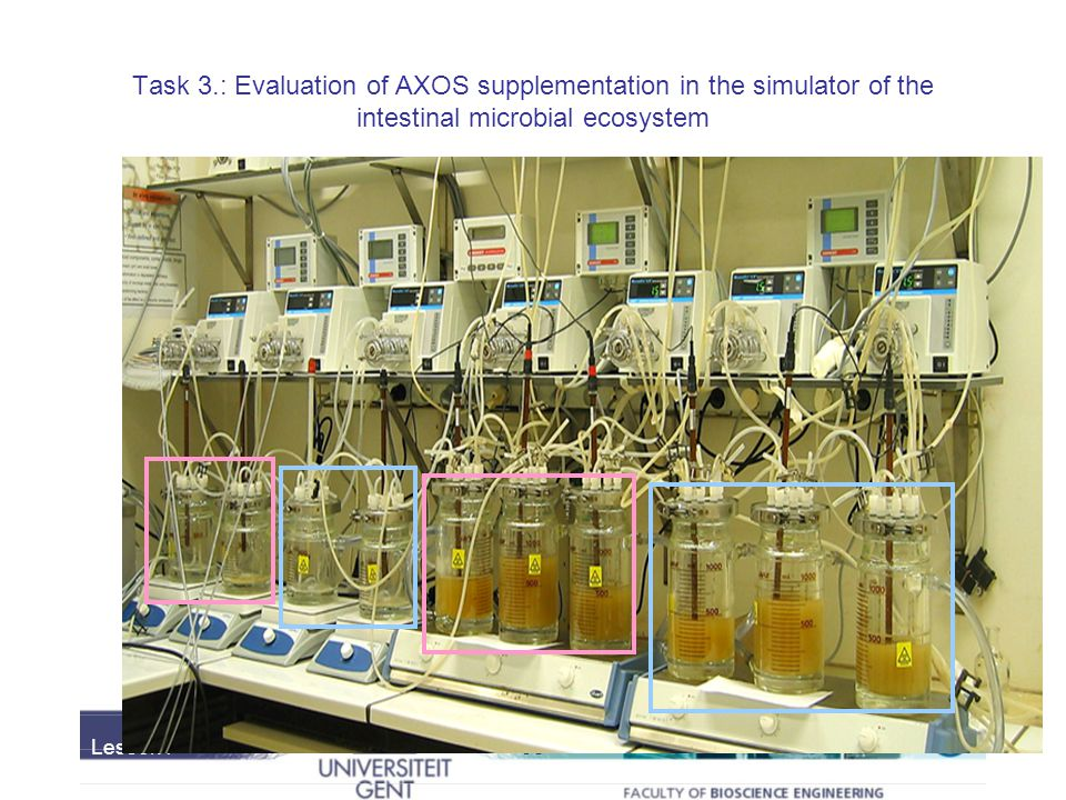 Task 3.: Evaluation of AXOS supplementation in the simulator of the intestinal microbial ecosystem