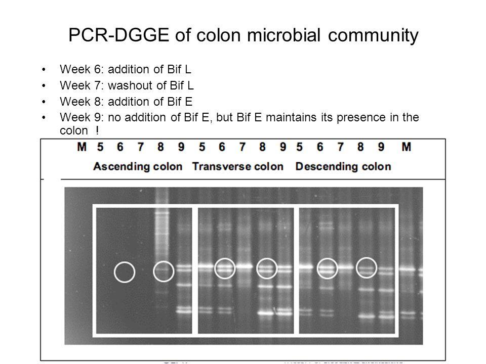 PCR-DGGE of colon microbial community