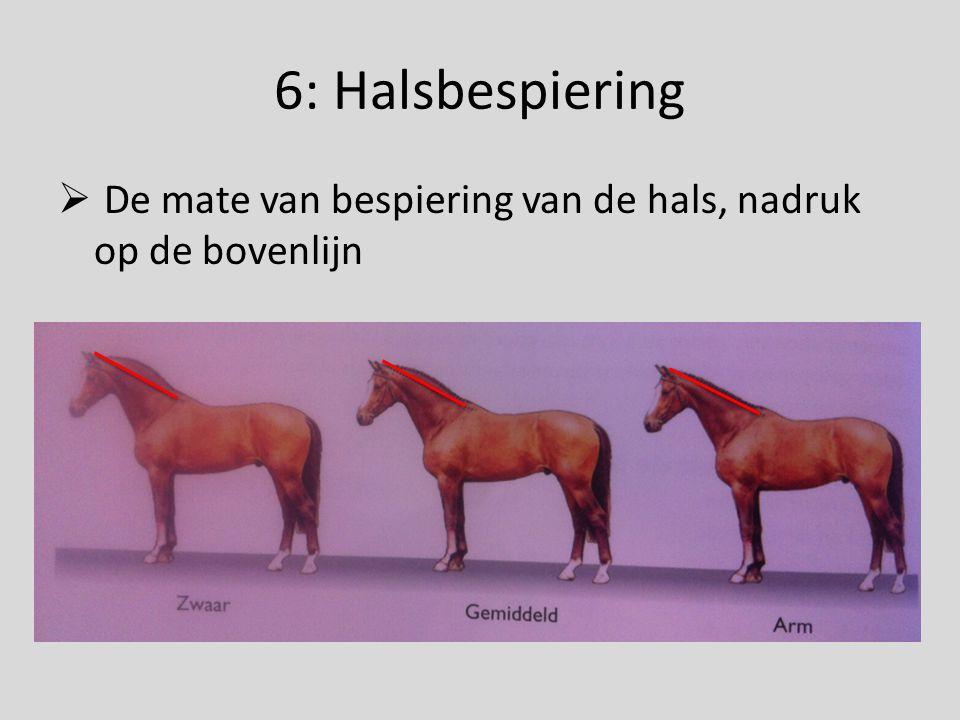 6: Halsbespiering De mate van bespiering van de hals, nadruk op de bovenlijn