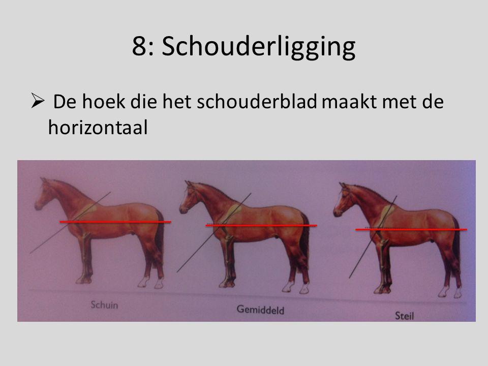8: Schouderligging De hoek die het schouderblad maakt met de horizontaal