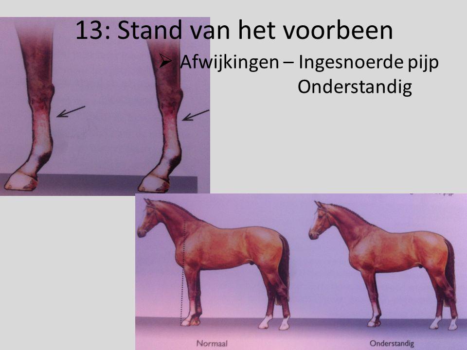 13: Stand van het voorbeen