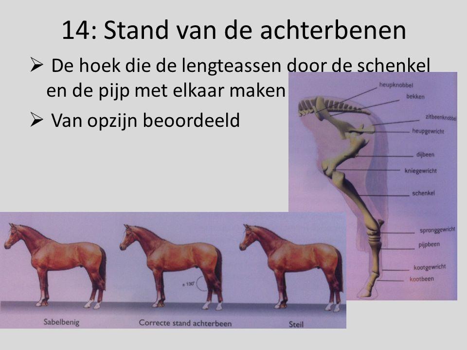 14: Stand van de achterbenen