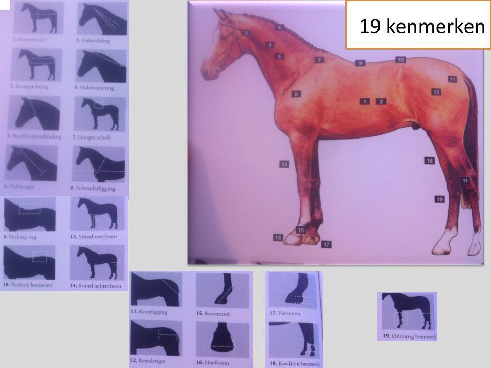19 kenmerken