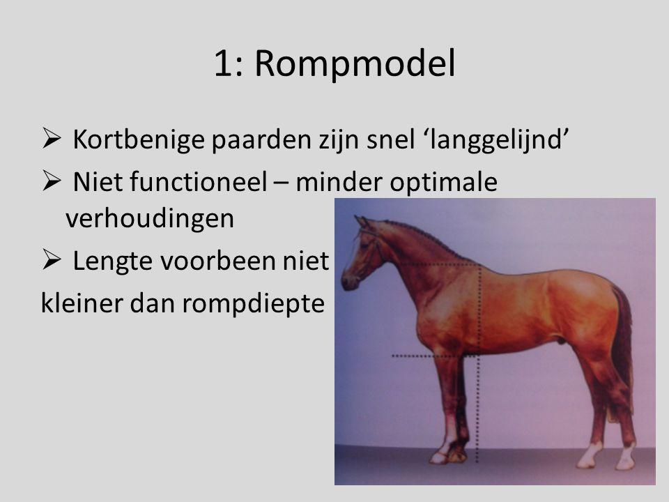 1: Rompmodel Kortbenige paarden zijn snel 'langgelijnd'