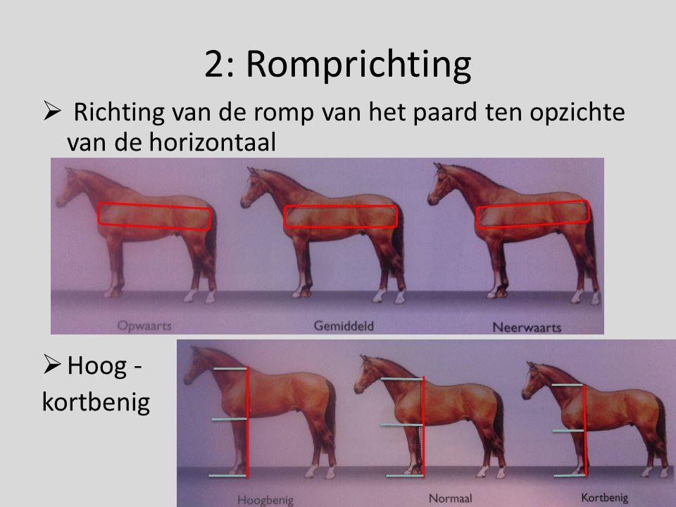 2: Romprichting Richting van de romp van het paard ten opzichte van de horizontaal Hoog - kortbenig