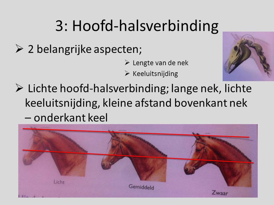3: Hoofd-halsverbinding