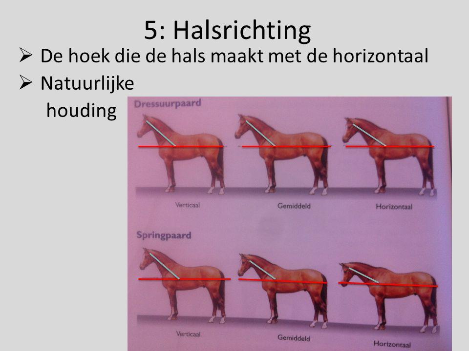5: Halsrichting De hoek die de hals maakt met de horizontaal