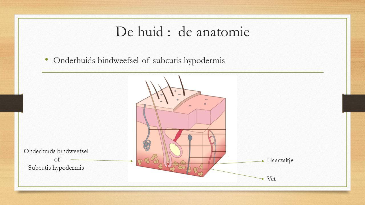 Onderhuids bindweefsel
