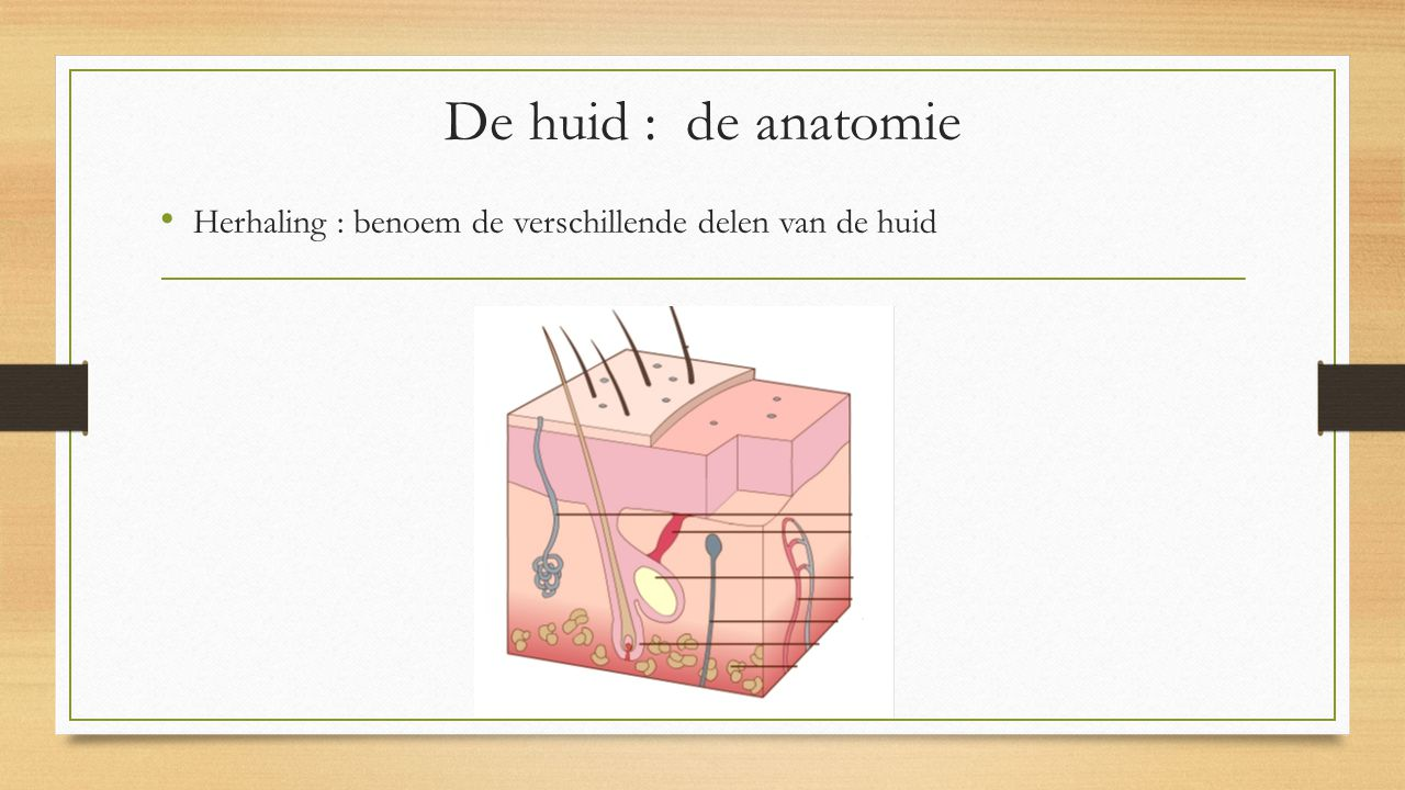 De huid : de anatomie Herhaling : benoem de verschillende delen van de huid