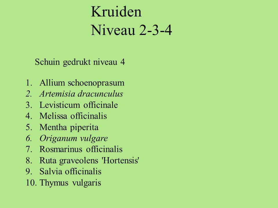 Kruiden Niveau 2-3-4 Schuin gedrukt niveau 4 Allium schoenoprasum