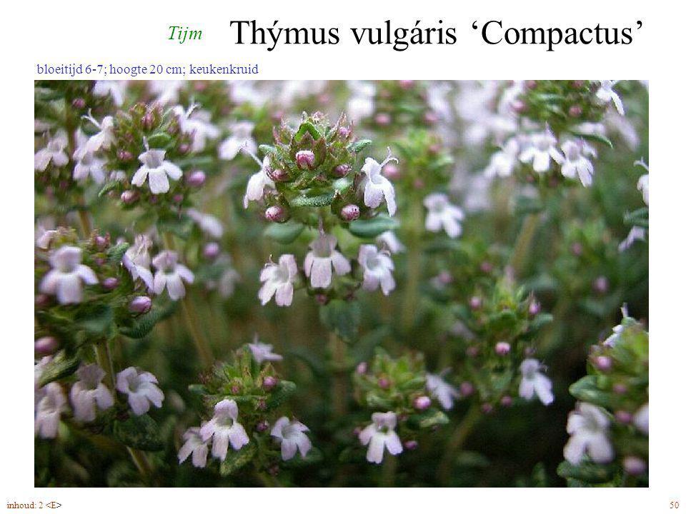 Thýmus vulgáris 'Compactus'