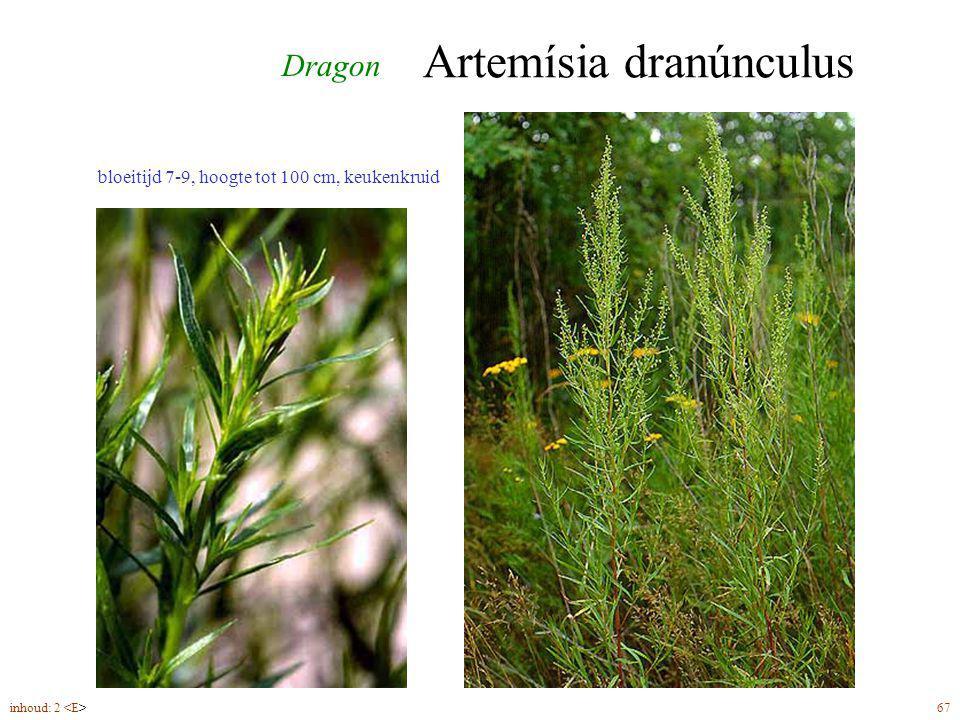 Artemísia dranúnculus