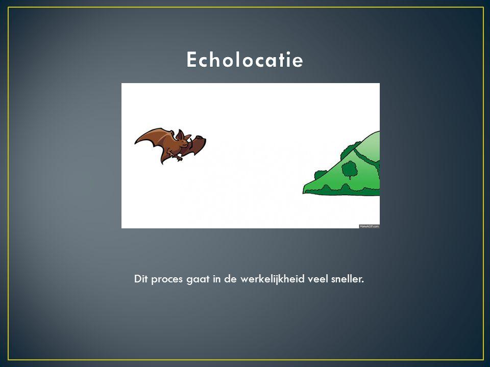 Echolocatie Dit proces gaat in de werkelijkheid veel sneller.