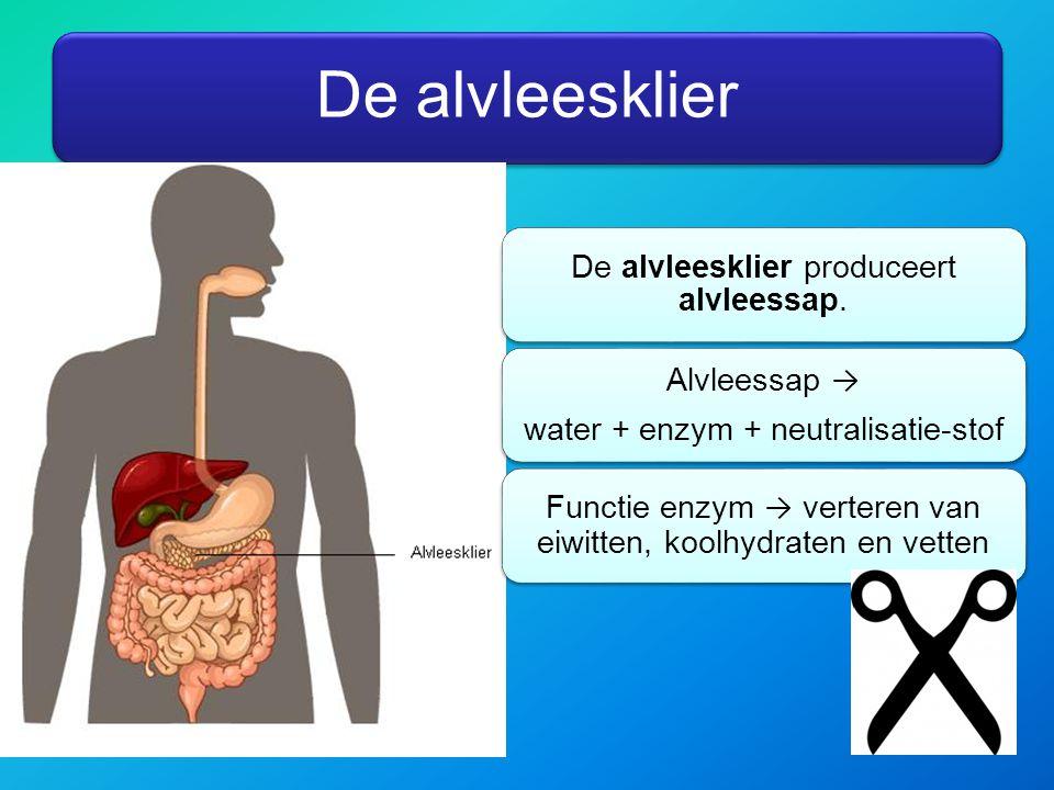 De alvleesklier De alvleesklier produceert alvleessap. Alvleessap →