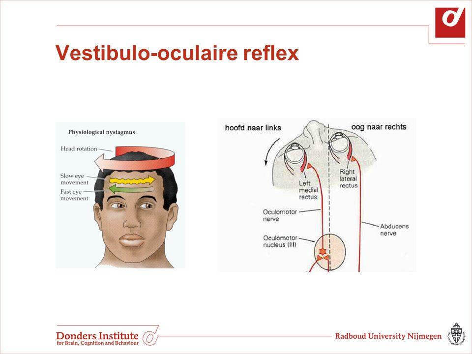Vestibulo-oculaire reflex