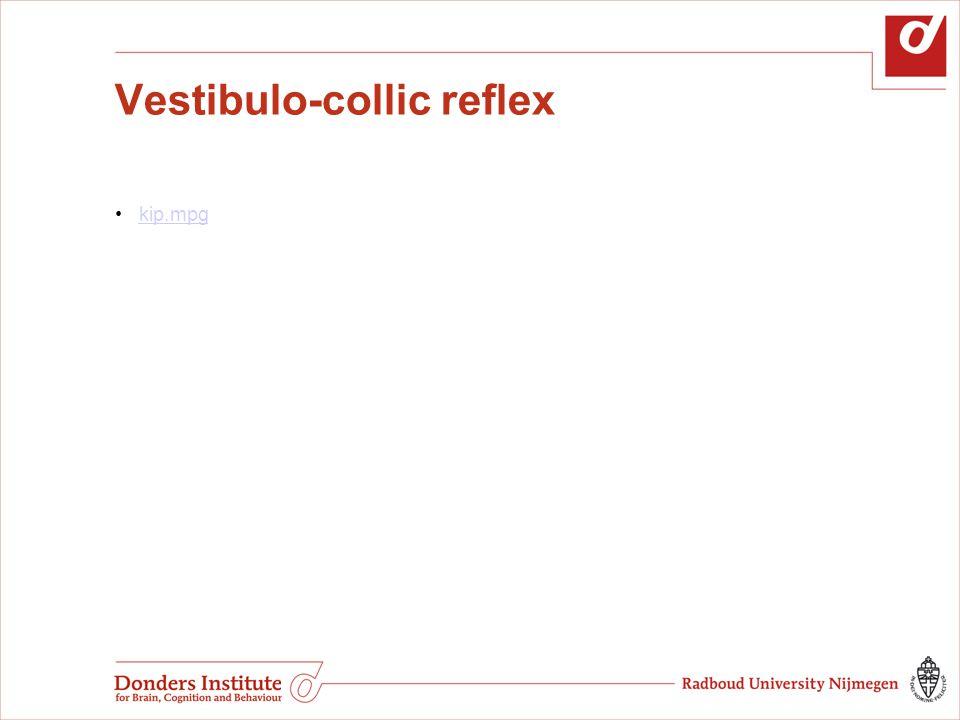 Vestibulo-collic reflex