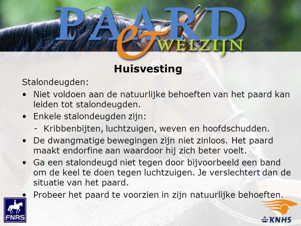 Huisvesting Stalondeugden: