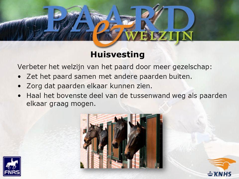 Huisvesting Verbeter het welzijn van het paard door meer gezelschap: