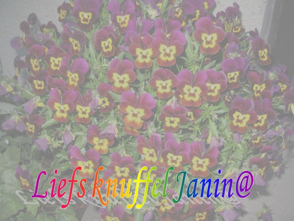 Liefs knuffel Janin@