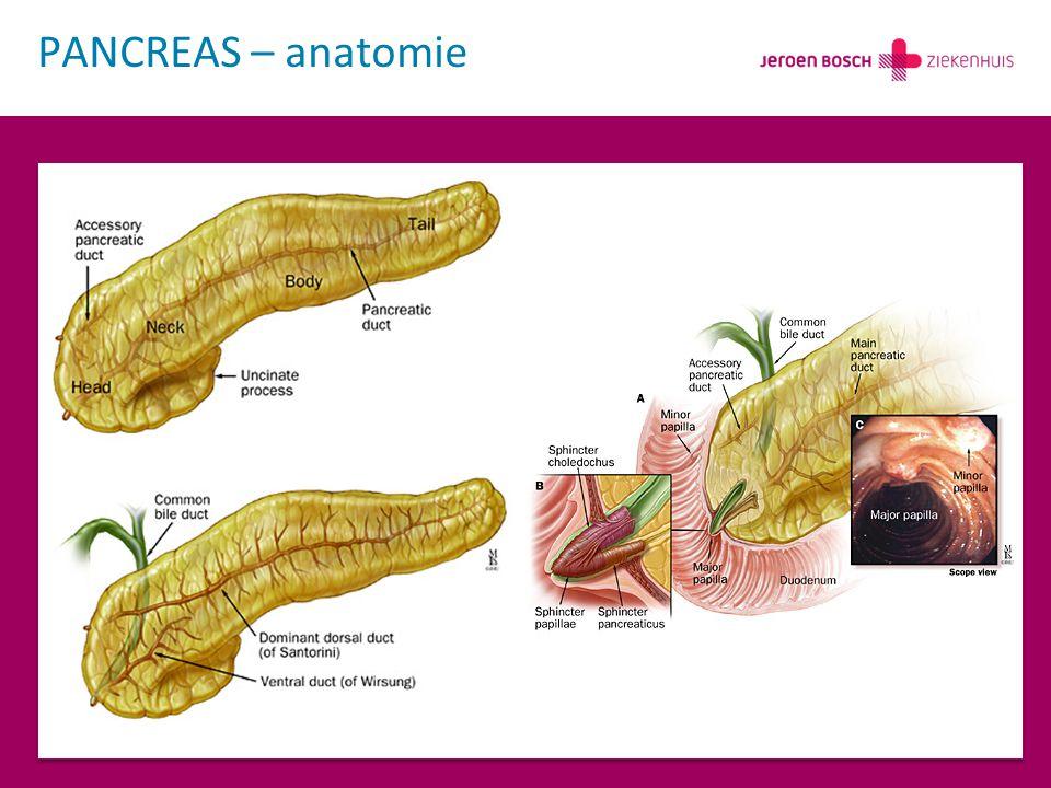 PANCREAS – anatomie