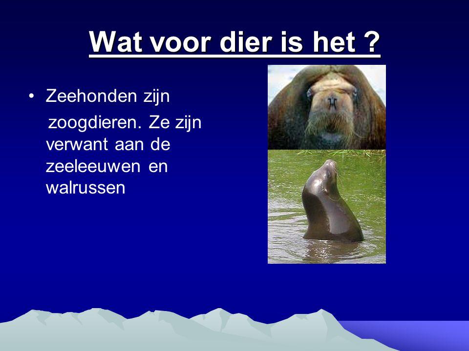 Wat voor dier is het Zeehonden zijn