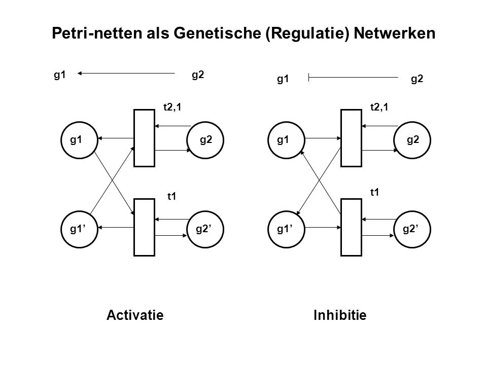 Petri-netten als Genetische (Regulatie) Netwerken
