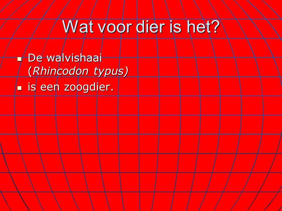 Wat voor dier is het De walvishaai (Rhincodon typus) is een zoogdier.